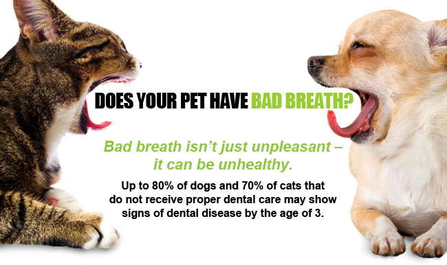 20 Off Special On Pet Dental Cleanings Animal Medical